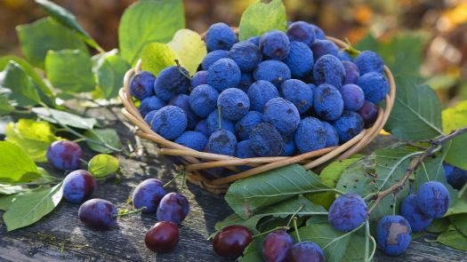 blueberry fruit