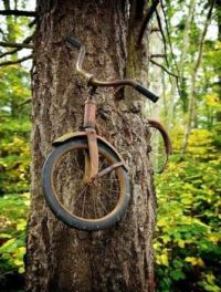 Bicycle Eaten by a Tree