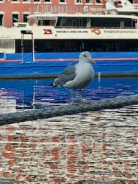 Reflective colors, with seagull