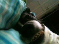 My dog in the morning:)