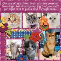 📷  Photos Cutie Pie Cats & Kittens #1