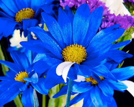 pretty blue flowers!!!!