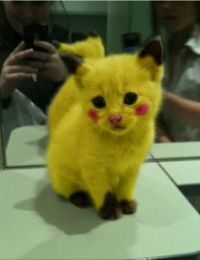 Pikachu Kitty!