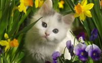 Daffy Cat