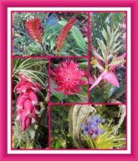 Winter is Bromeliad Time Here. Smaller.