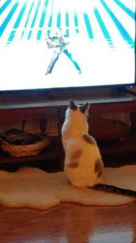Judah watching DWTS