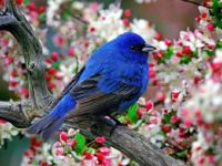 Little Blue Bird 2_26