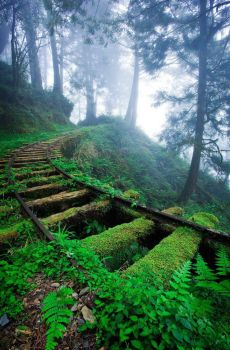 Overgrown railroad tracks in a forest