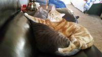 cats (1) - Copy