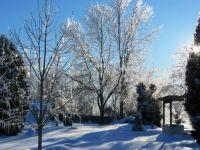 Glistening trees