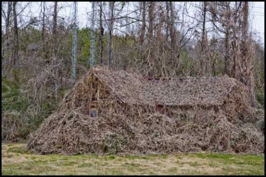 The same Kudzu covered home in January 2008