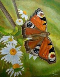 """Themes """" Insects""""   - butterfly"""