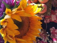 Big sunflower with persimmons