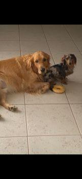 Neville and Zippy