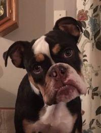 My Grand Dog Eleanor