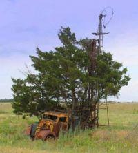 Hauling Trees?