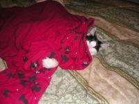 Brandee sleeping in my pj's, cutie