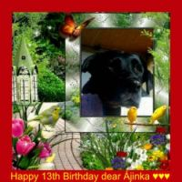 Happy 13th Birthday dear Ajinka ♥♥♥