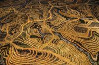 new-palm-oil-plantation-near-pundu-borneo-indonesia