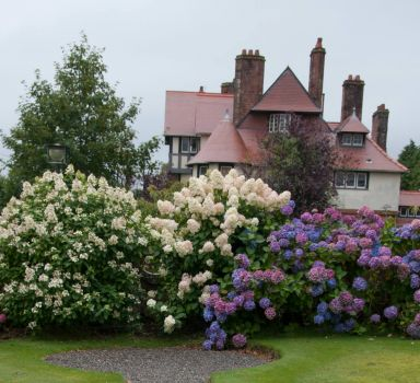 Hydrangeas and the Hill House's neighbour