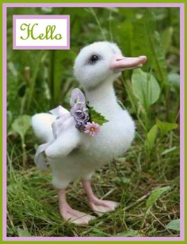 HELLO.....Have a nice day