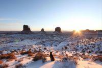 Stray dog in Monument Valley, AZ