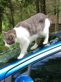Oscar Atop My Prius (4)