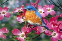 Lovely Bluebird and Pink Dogwood