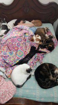 Good Night Cat Lady