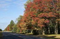 Fall Color - Alanson, MI
