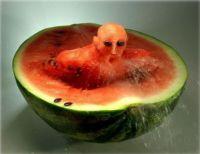 phelps melon