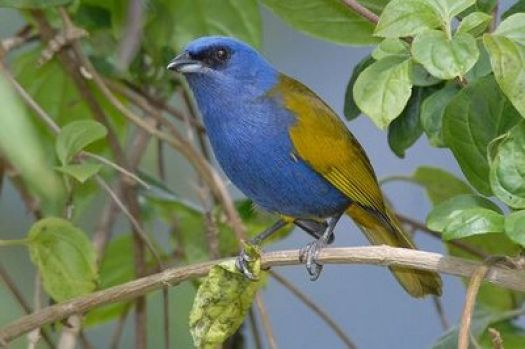 Beautiful blue color bird