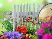 Pretty Fence Flowers