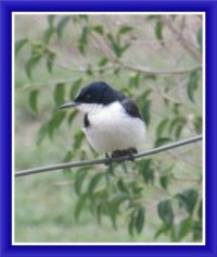 My Bird for Today, Seen in Our Garden.  Smaller.