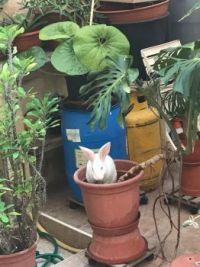 Bunny misbehaving