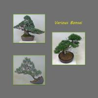 Various-bonsai,.