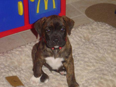 buddy as a puppy