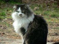 P1120467 puss puss