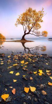 Fall has Fell