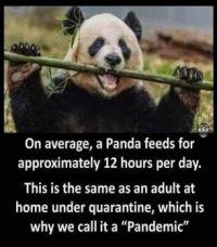 I'm a Panda !