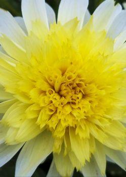 Flower Four
