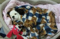 All tucked up in bed