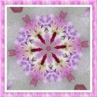 Orchid Kaleido. Smaller.