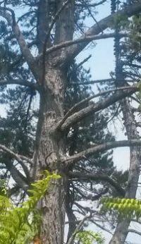 tree hugga