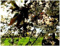 Jarní---