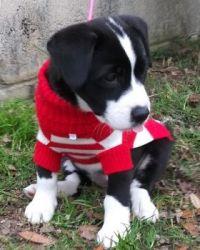 Lulu's 'Wheres Waldo' sweater