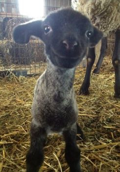'What a cute sheepish grin..!!'