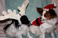 Santa Paws and her little Reindeer