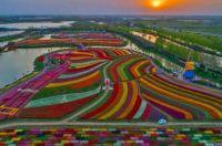 Holland Sea of Flowers