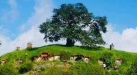 Big handmade tree in Hobbiton